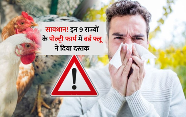 Bird flu Symptoms: अब तक 9 राज्यों के मुर्गियों में हुई Bird Flu की पुष्टि, जानें लक्षण
