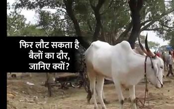 भारत के कई किसान बैलों की मदद से बनाते हैं बिजली, पतंजलि भी अपना रही है फार्मूला