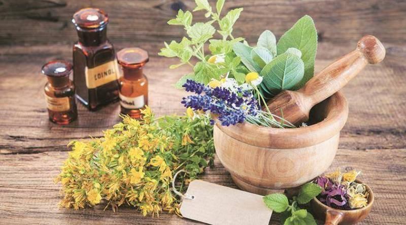 Medicinal Plants Cultivation