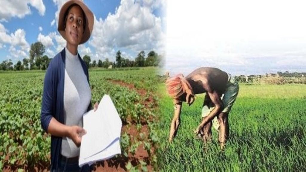 India USA Farmer