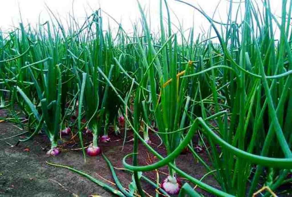 Onian Farming