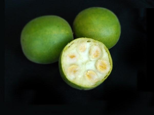 Monkfruitblack