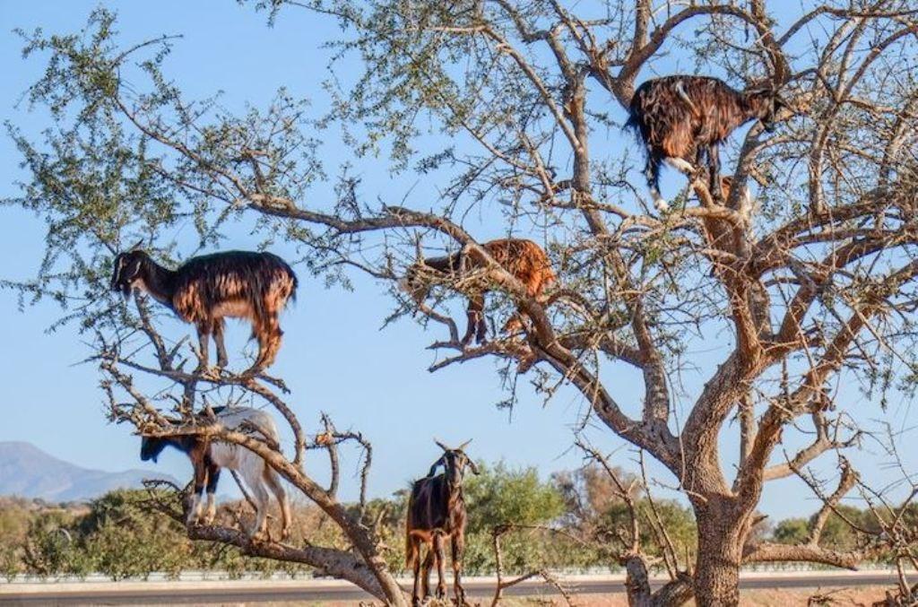Argen Tree
