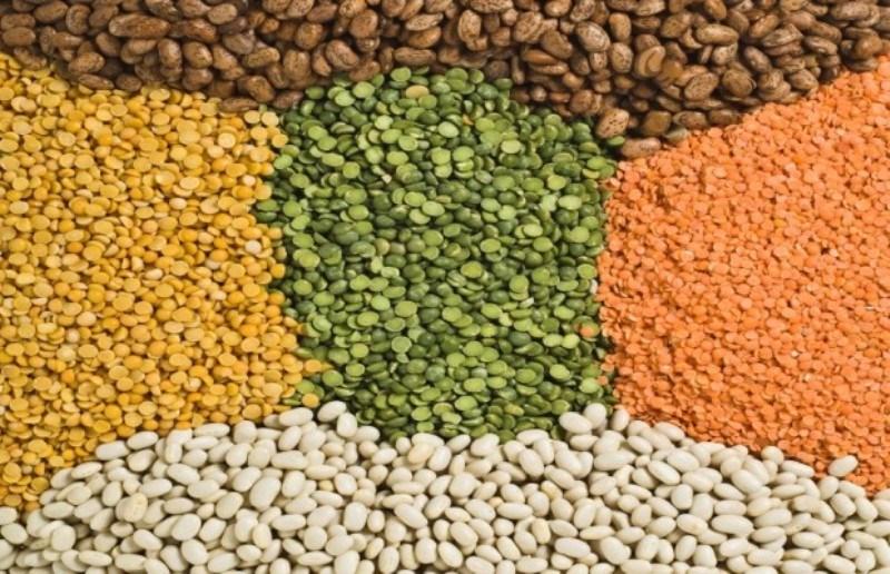 Pulse crop
