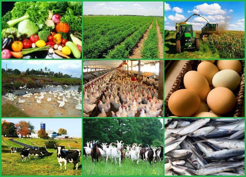 Agriculture Kisan