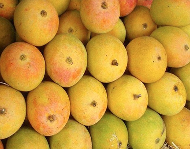 Jardalu Mango