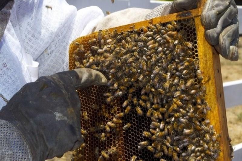 Beekeeping Business Idea