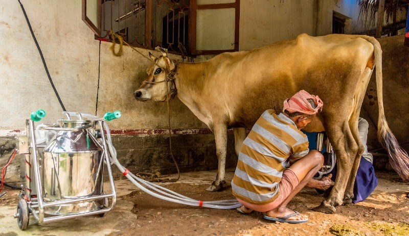 दूध काढण्याचे यंत्र
