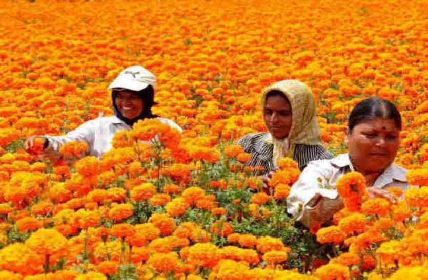 फुलांची शेती