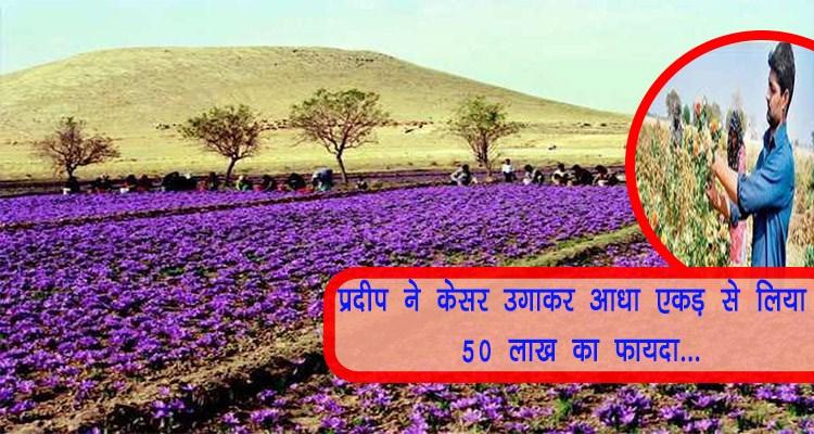 Kesar farming in India