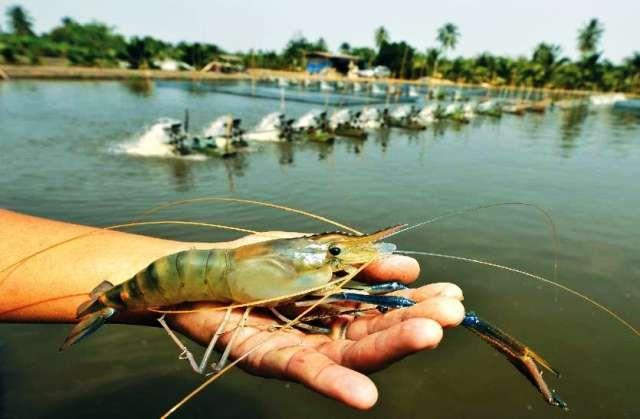 Fish Jheenga