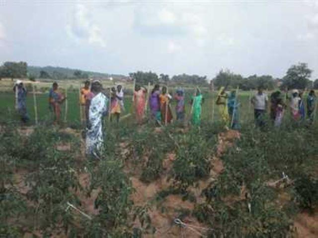 MULTI  FARMING