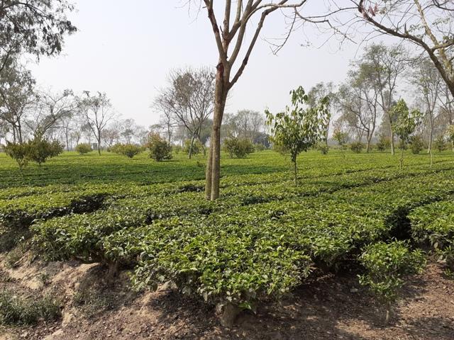tea unit